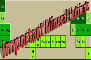 mineral-nutrients-200-300