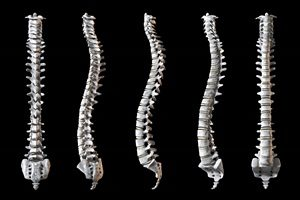 Views of the spine